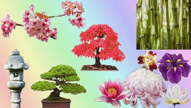 Растения для японского сада