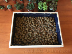 Дренаж для посадки суккулентов и кактусов