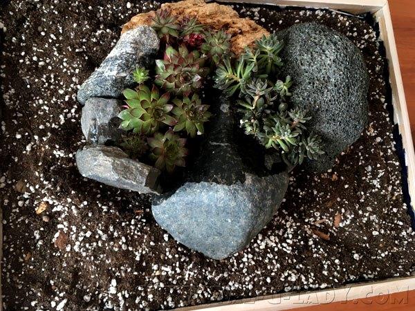 Как сделать горку из камней и суккулентов