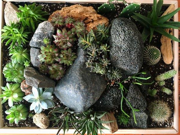 Мини-садик из суккулентов и кактусов