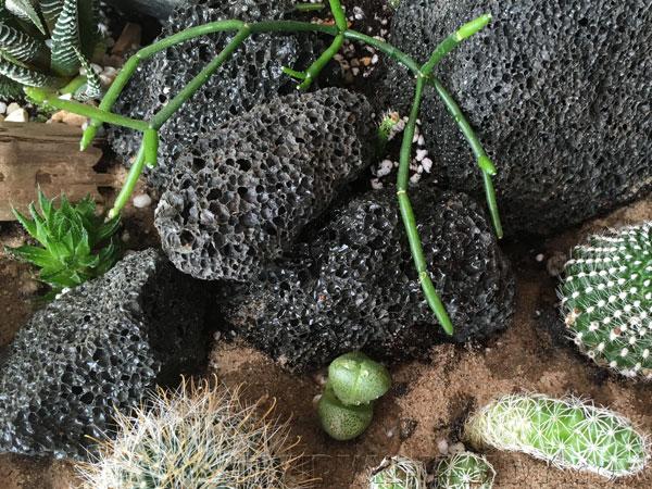 Красивая композиция из камней, кактусов, суккулентов