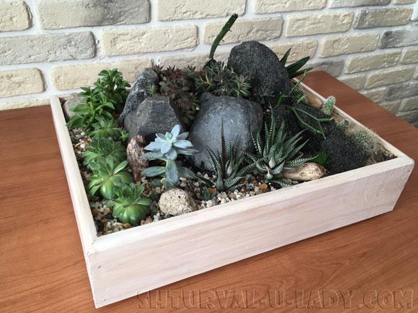 Мини-сад из суккулентов и кактусов в ящике