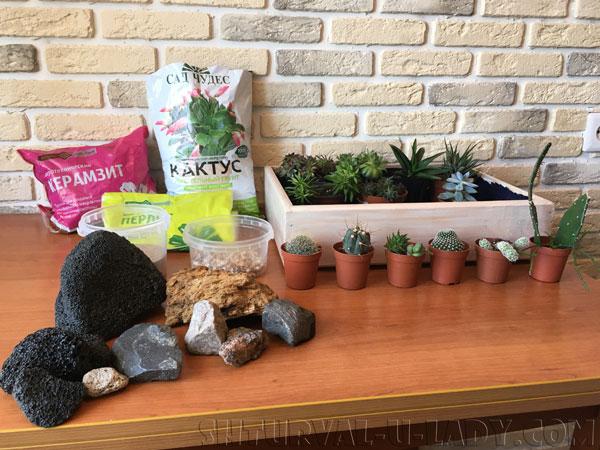 Материалы для композиции из суккулентов и кактусов
