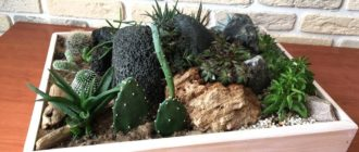 Красивая композиция: кактусы, суккуленты