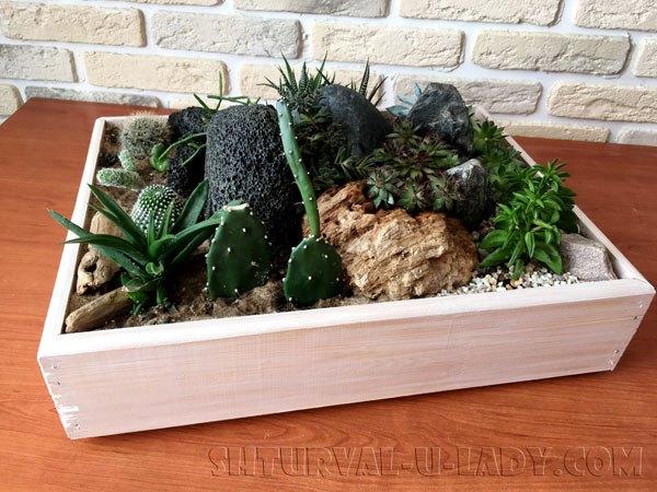 Кактусы, камни, суккуленты, композиция