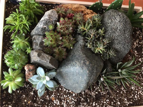Высадка растений возле камней