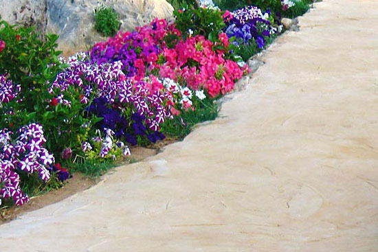 Почвопокровные цветы для дорожек