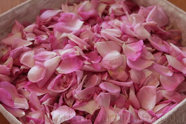 Чайная роза лепестки
